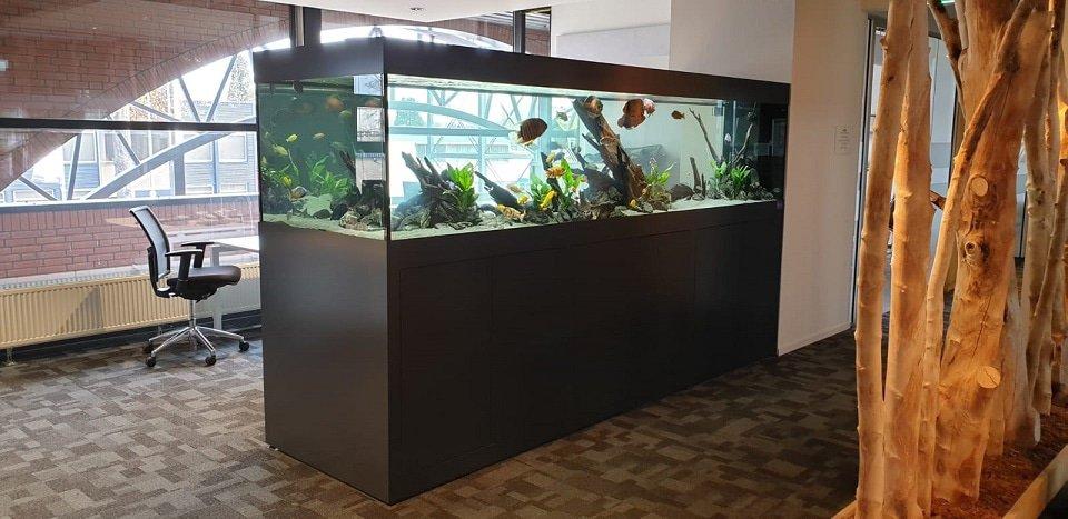 Kantoor aquarium